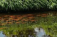 De fauna en flora van de zwemvijver