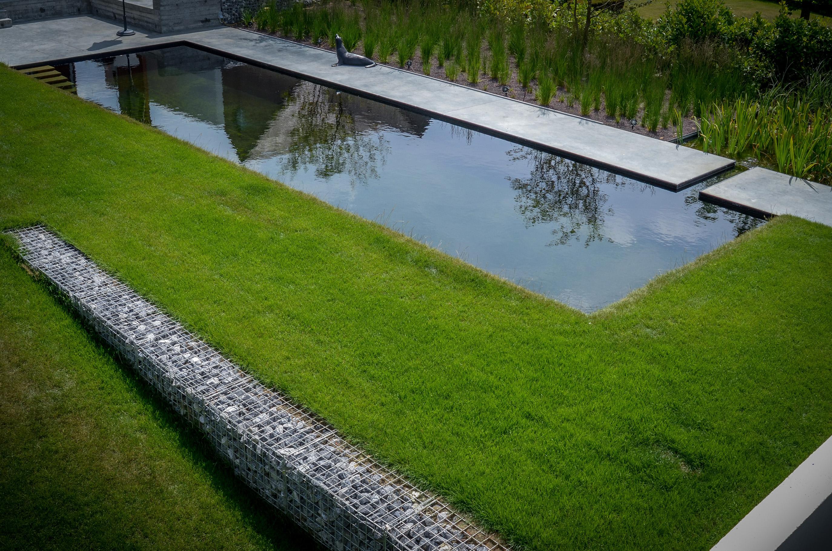 Zwembad van de zwemvijver project c zwembadenplus for Zwemvijver afmetingen
