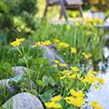 Kleurrijke, maar ook nuttige planten